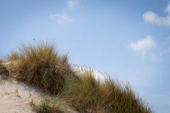 Dunes et Oyats à Berck-sur-Mer